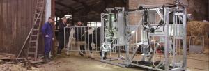 klauwbekapbox verwegen koe